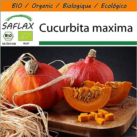 SAFLAX - - Ecológico - Calabaza - Hokkaido - 5 semillas ...