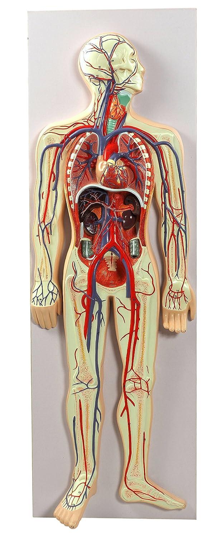 【希望者のみラッピング無料】 【frugolio casa【frugolio】 血管系 高精度 80cm- 1.4653 血管系 80cm- B0170QL7ZI, 有名な高級ブランド:a4571e0b --- a0267596.xsph.ru