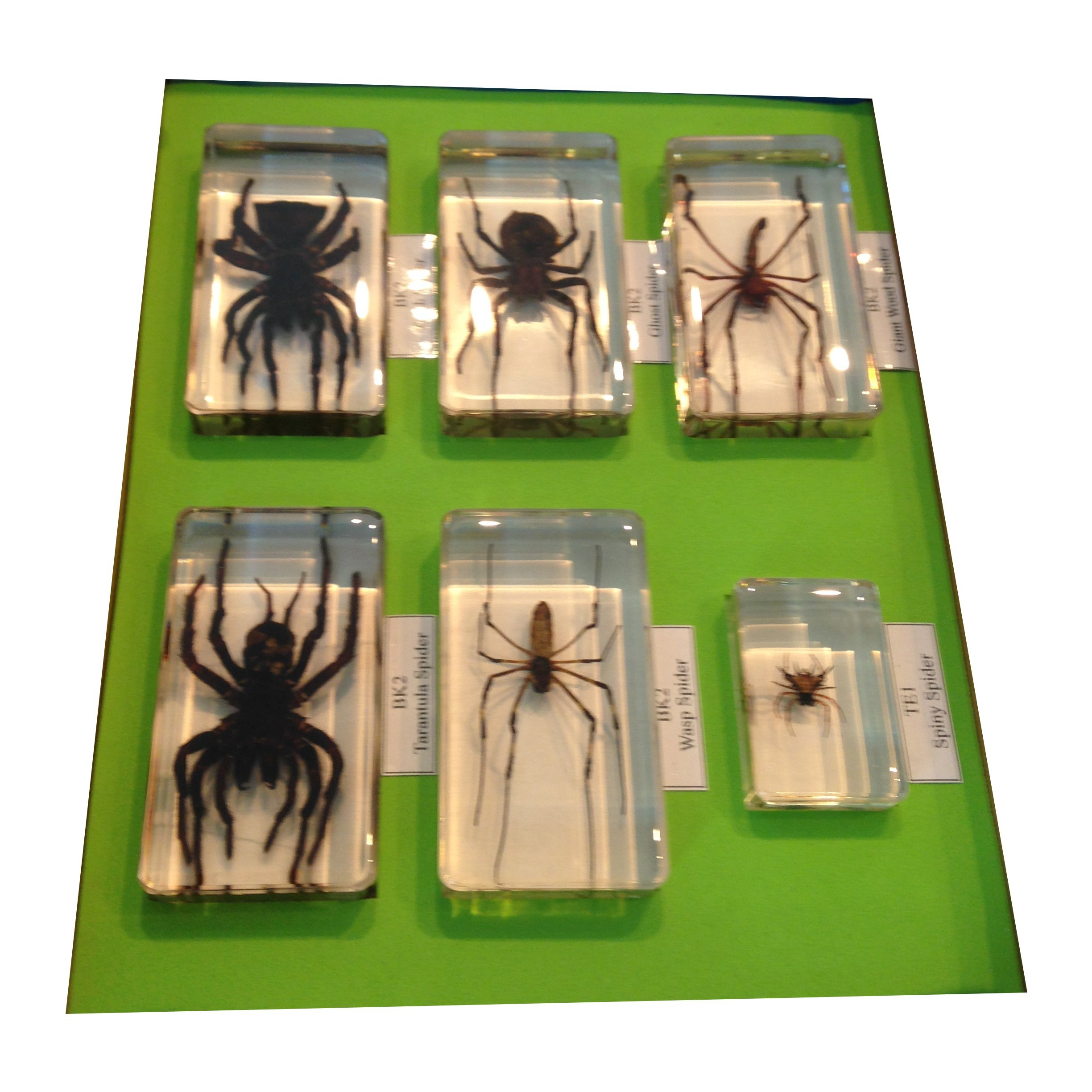 Six Spiders in Acrylic Collection