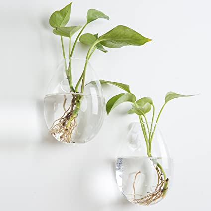 Amazon.com & MyGift Wall-Mounted Clear Glass Terrarium Flower Vases Set of 2