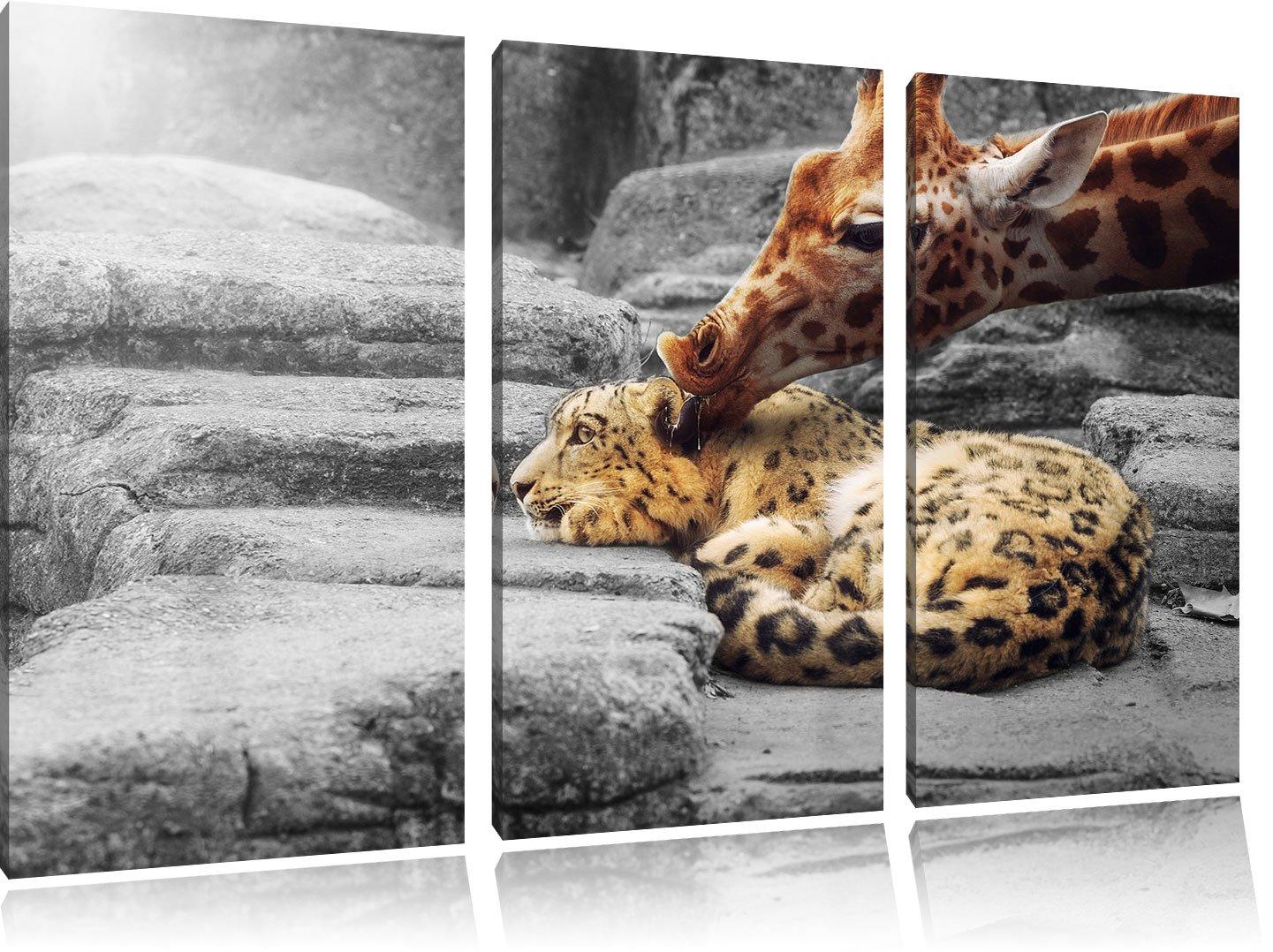 Kuschel Santander Leopard y jirafa B & W detalle 3 piezas Lienzo 120 x 80 imagen sobre lienzo, XXL enormes Fotos completamente enmarcado con camilla, ...