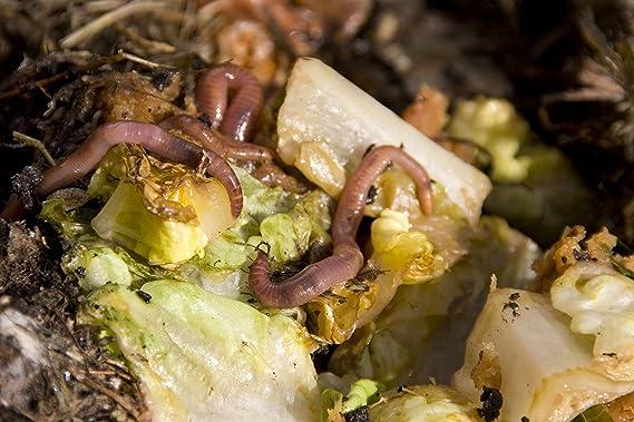 Cheeperplace Kompostbeschleuniger Comprar compostador - 500 ...