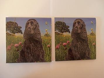 Kühlschrank Quadratisch : 2 x warnschild cocker spaniel schwarz hund 10 2 cm quadratisch