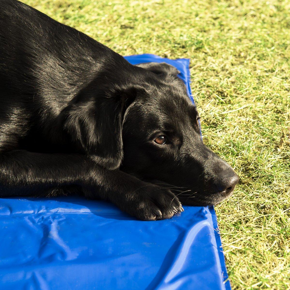 Navaris Alfombra de enfriamiento para Mascotas - Manta refrescante 40x50CM para Perro Gato - Alfombrilla de refrigeración en Azul Oscuro: Amazon.es: ...