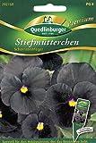 Schwarze Stiefmütterchen, Schornsteinfeger, Viola wittrockiana, ca. 20 Samen