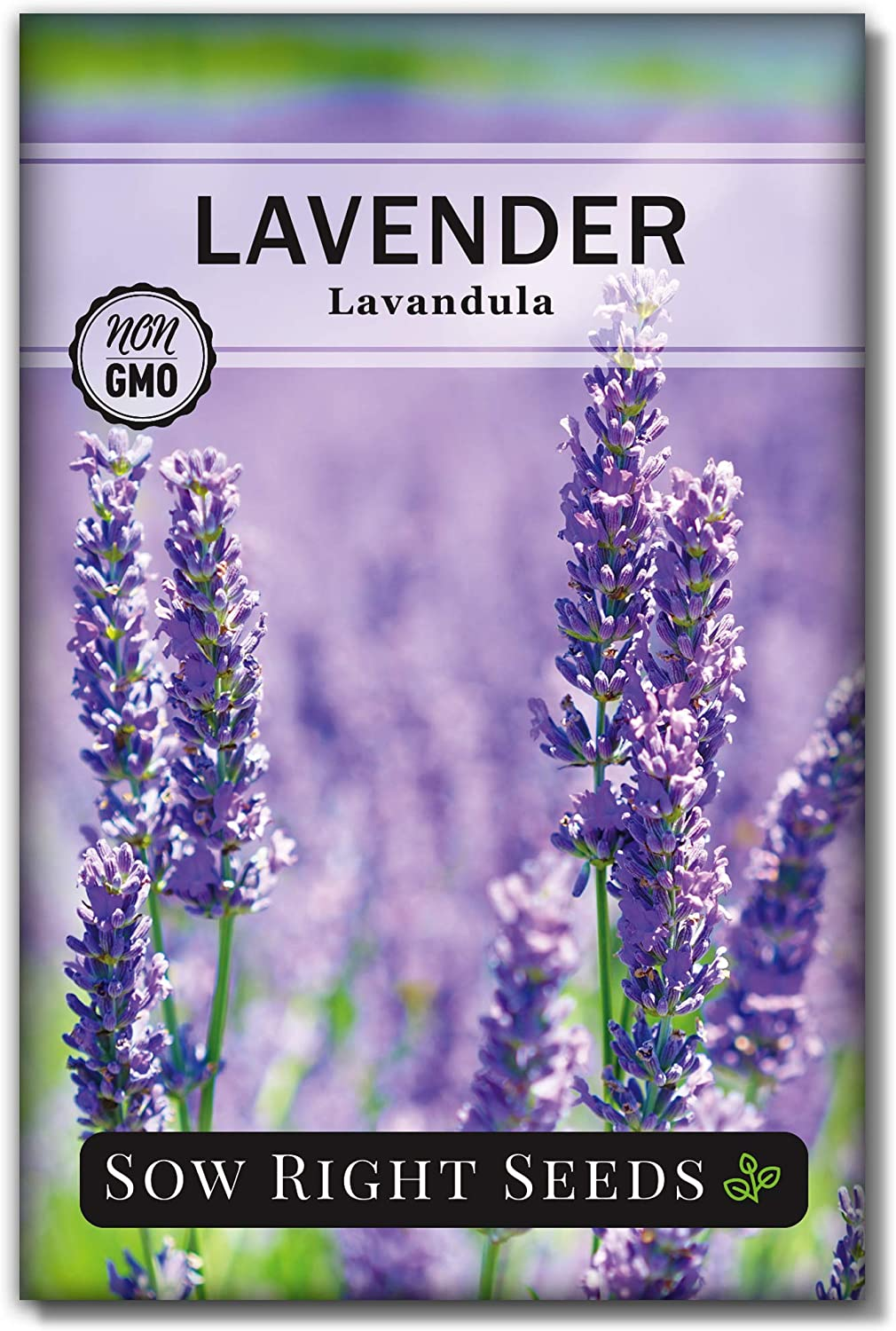 Sow Right Seeds - Lavender Seeds for Planting; Non-GMO Heirloom Seeds with Instructions to Plant and Grow a Beautiful Indoor or Outdoor herb Garden; Great Gardening Gift (1)