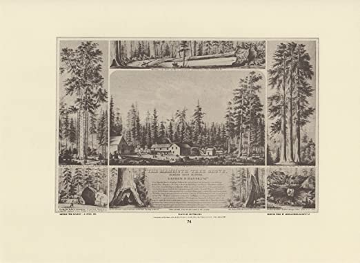 "1976 Vintage CALIFORNIA /""MAMMOTH TREE GROVE CALAVERAS COUNTY 1855/"" Lithograph 74"