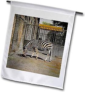 3dRose Scenes from The Past - Magic Lantern - Vintage Early 1900s Zebra in The Zoo Victorian Era Photo Wildlife - 12 x 18 inch Garden Flag (fl_301302_1)
