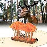 3D Pop Up Greeting Card - Wandering Deer In