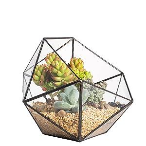 NCYP Geometric Glass Terrarium Half Ball Pentagon Planter Indoor Balcony Window Sill Succulent Plant Cacti Fern Flower Pot Container Tabletop Bowl Shape Vase Bonsai Miniature Centerpiece