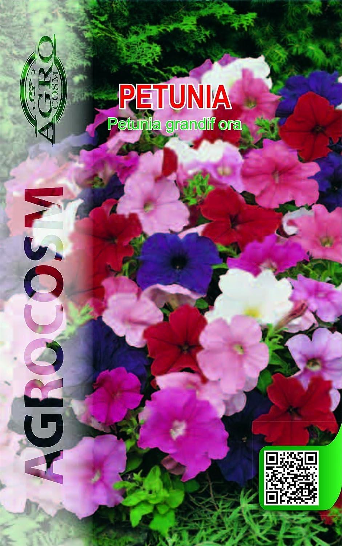 1 Pack 20 Seeds Fragrant Mix Color Arabian Jasmine Garden Flower