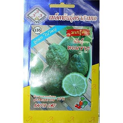 15seeds Thai Kaffir Lime, Citrus Hystrix, Bai Magrood, Leech Lime Seeds by 3A : Garden & Outdoor