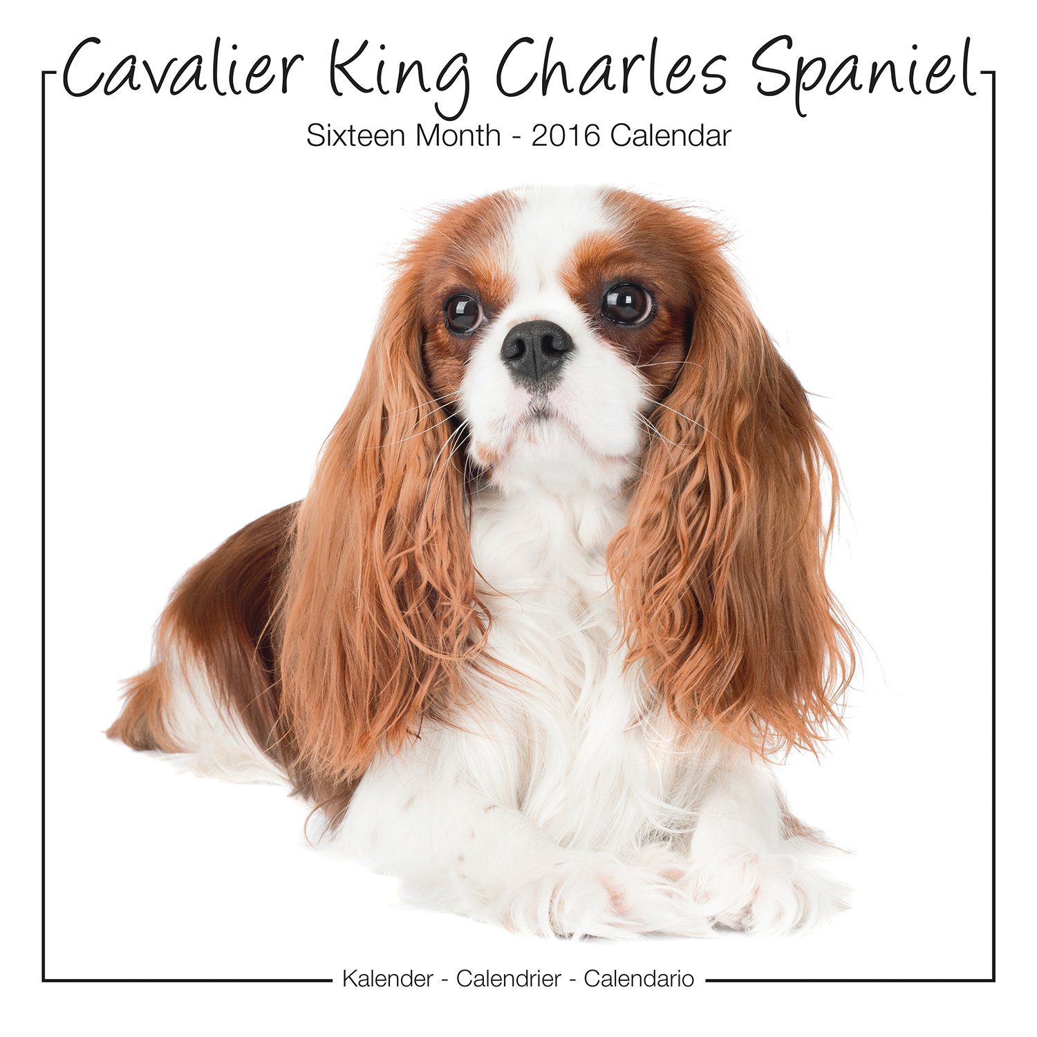 Cavalier king charles spaniel calendar 2016 wall calendars dog cavalier king charles spaniel calendar 2016 wall calendars dog calendars monthly wall calendar by avonside studio megacalendars 9781782086833 nvjuhfo Image collections