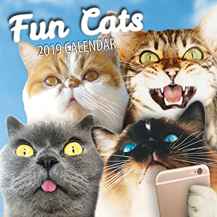 Fun Cats Calendario de pared de gatos 2020 (2019): Amazon.es: Oficina y papelería