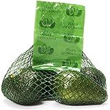 Avocado Hass Bag Organic, 4 Count