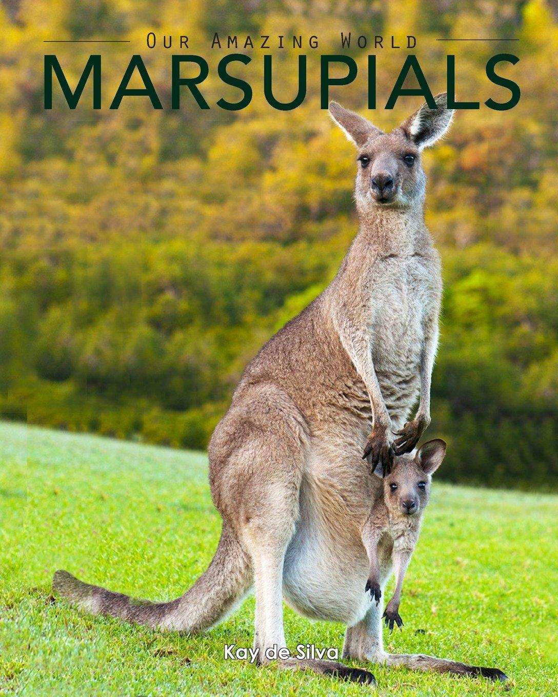 Marsupials Amazing Pictures Animals Nature