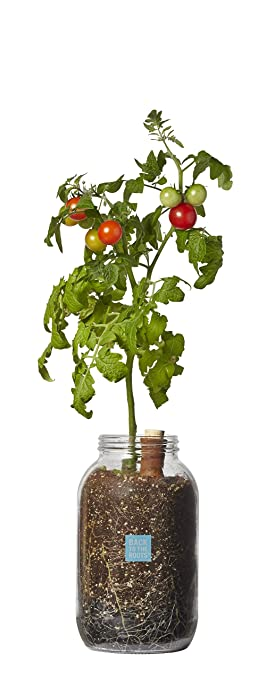 Amazon back to the roots grow your own organic cherry tomato back to the roots grow your own organic cherry tomato kit self watering tomato workwithnaturefo