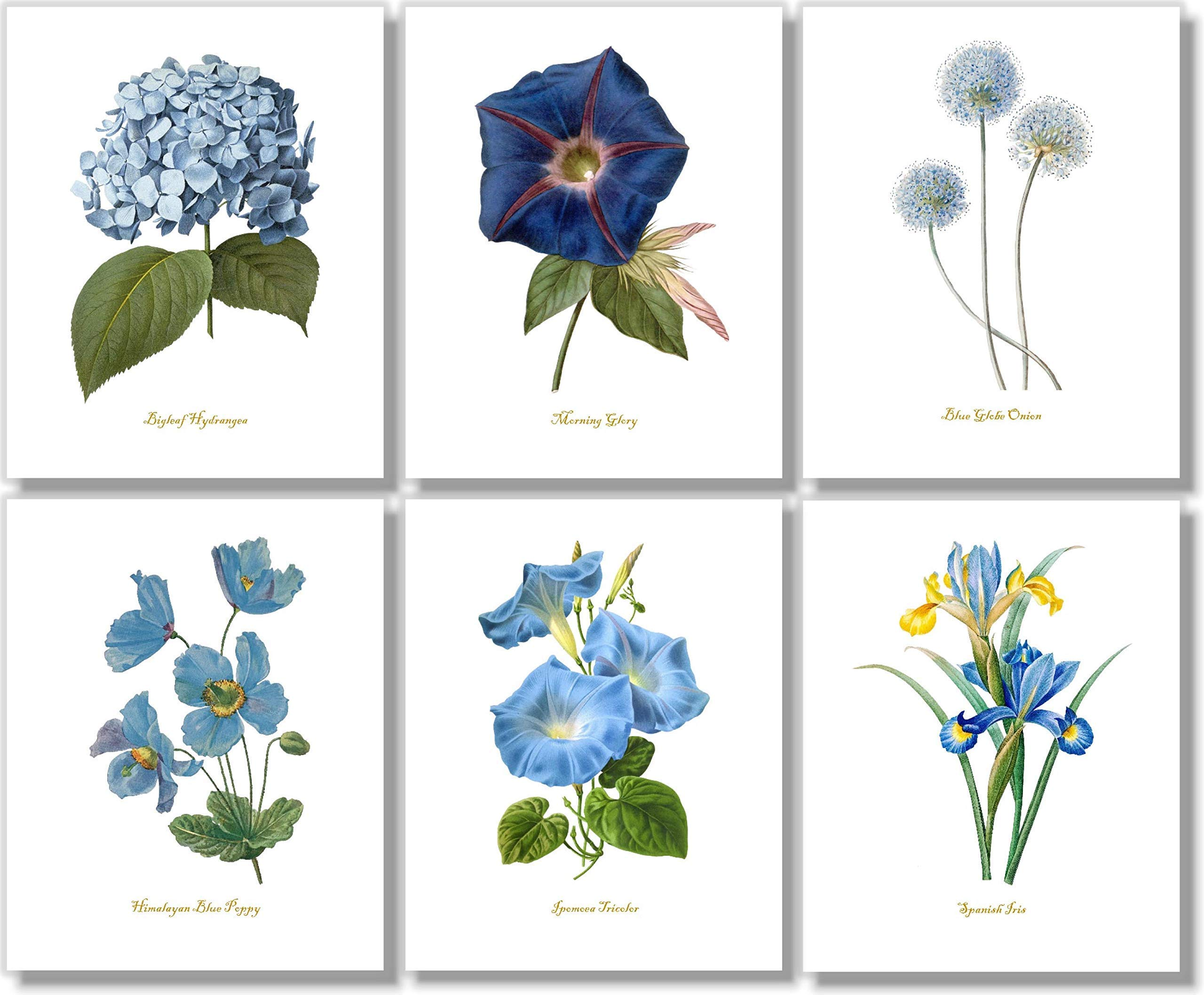 Blue Flower Wall Art - Vintage Floral Decor - Botanical Prints (Set of 6) - 8 x 10 - Unframed