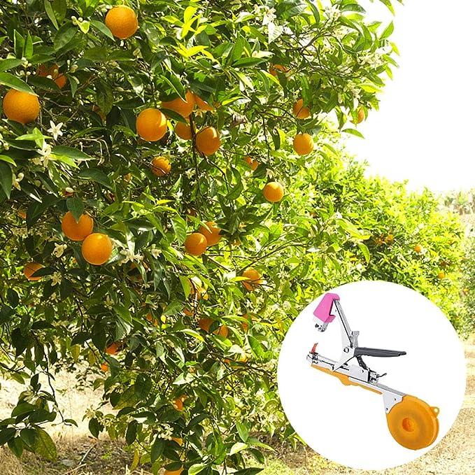 Ao Ma Shang Mao - Aparato para Hacer Verduras y Frutas con pepinos ...