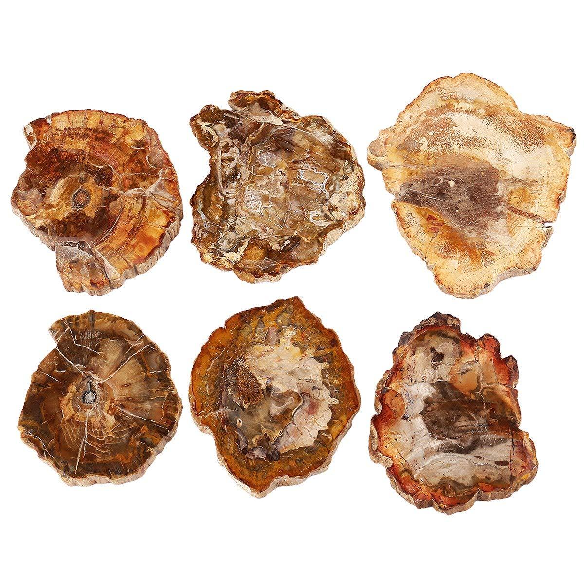 Pack of 1 SUNYIK Irregular Natural Petrified Wood Slab Slice Stone Mineral Specimen 3-5