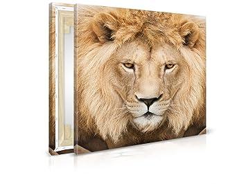 Immagine lion closeup b quadro stampata quadro telaio