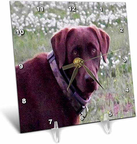 3dRose LLC Chocolate Lab Oil Painting 6 by 6-Inch Desk Clock