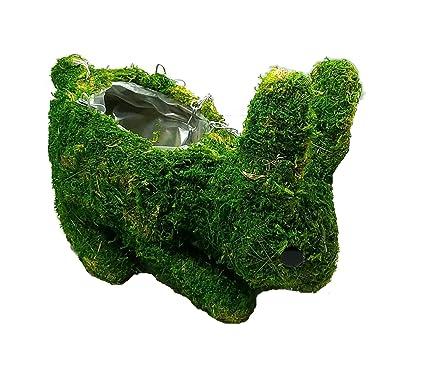 Amazon.com: Animal musgo y cordel macetas, Verde: Jardín y ...