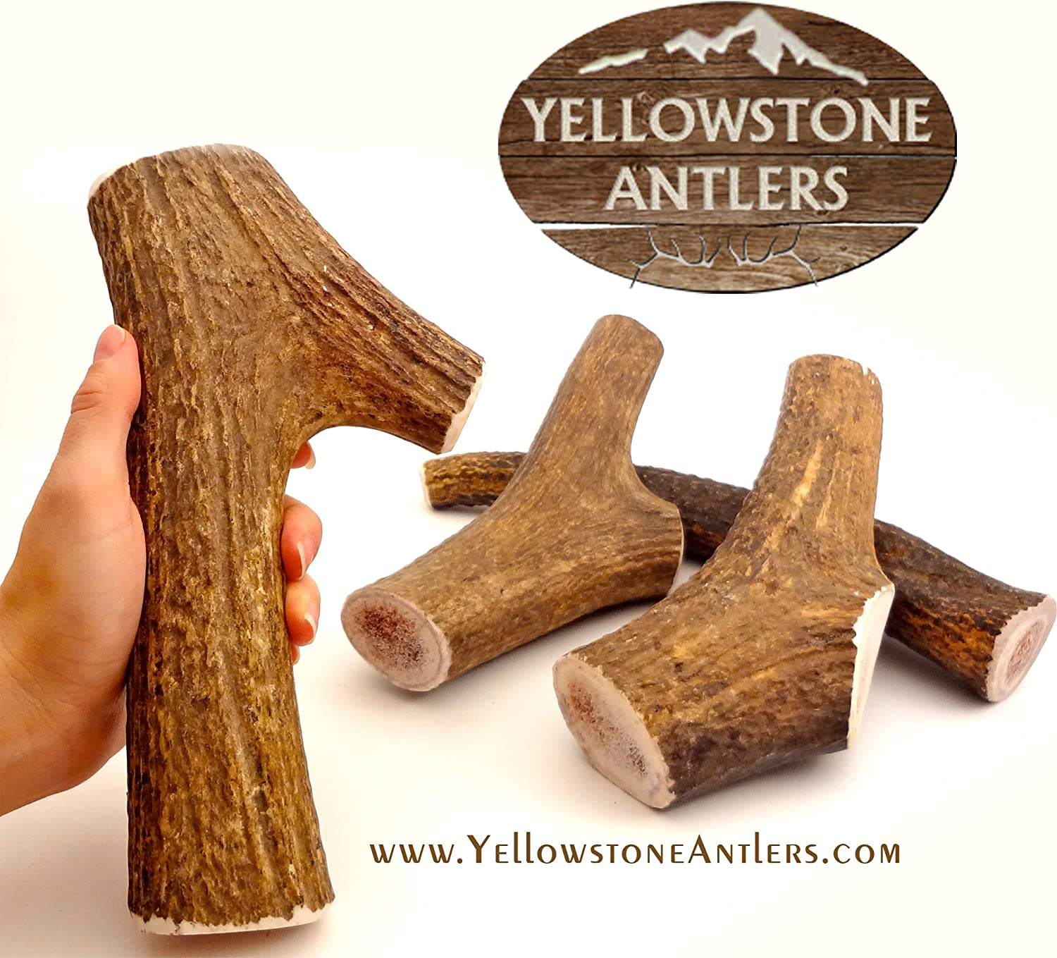 Yellowstone Antlers Grade-A Made in USA, XL Extra-Large Size 8.5-10.5 Inches Long 12-14 Ounces, X-Large Elk Antler Dog Chews, Dog Bones, Elk Bones Organic Dog Chews for Large, X- Large Dogs