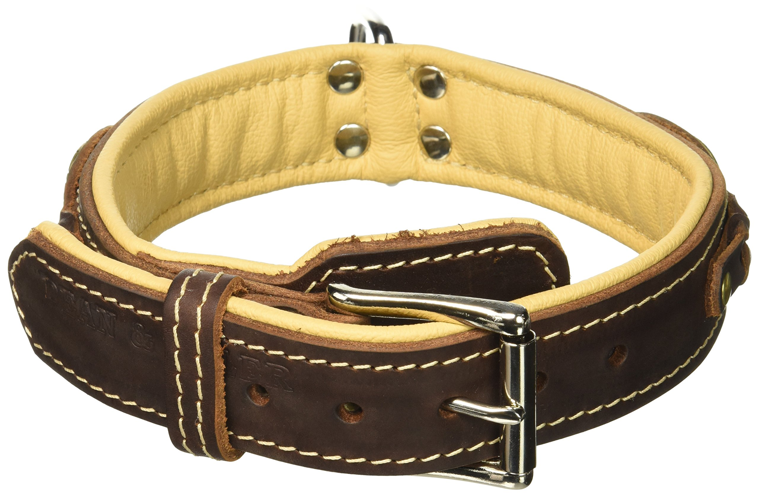 Dean & Tyler Dean's Legend Dog Collar with Brown Padding and Chrome Plated Steel Hardware, 20 by 1-1/2-Inch, Brown