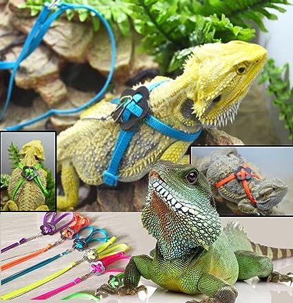 Amazon.com : JINS Adjustable Reptile Lizard Harness Leash ...