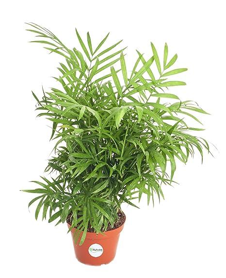 Amazon.com: Shop Succulents Live 4