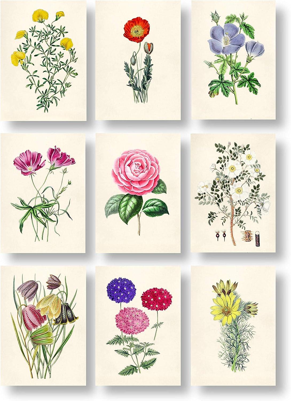 Amazon Com Ink Inc Botanical Prints Floral Wildflowers Vintage Wall Art Prints Set Of 9 5x7 Matte Unframed Posters Prints