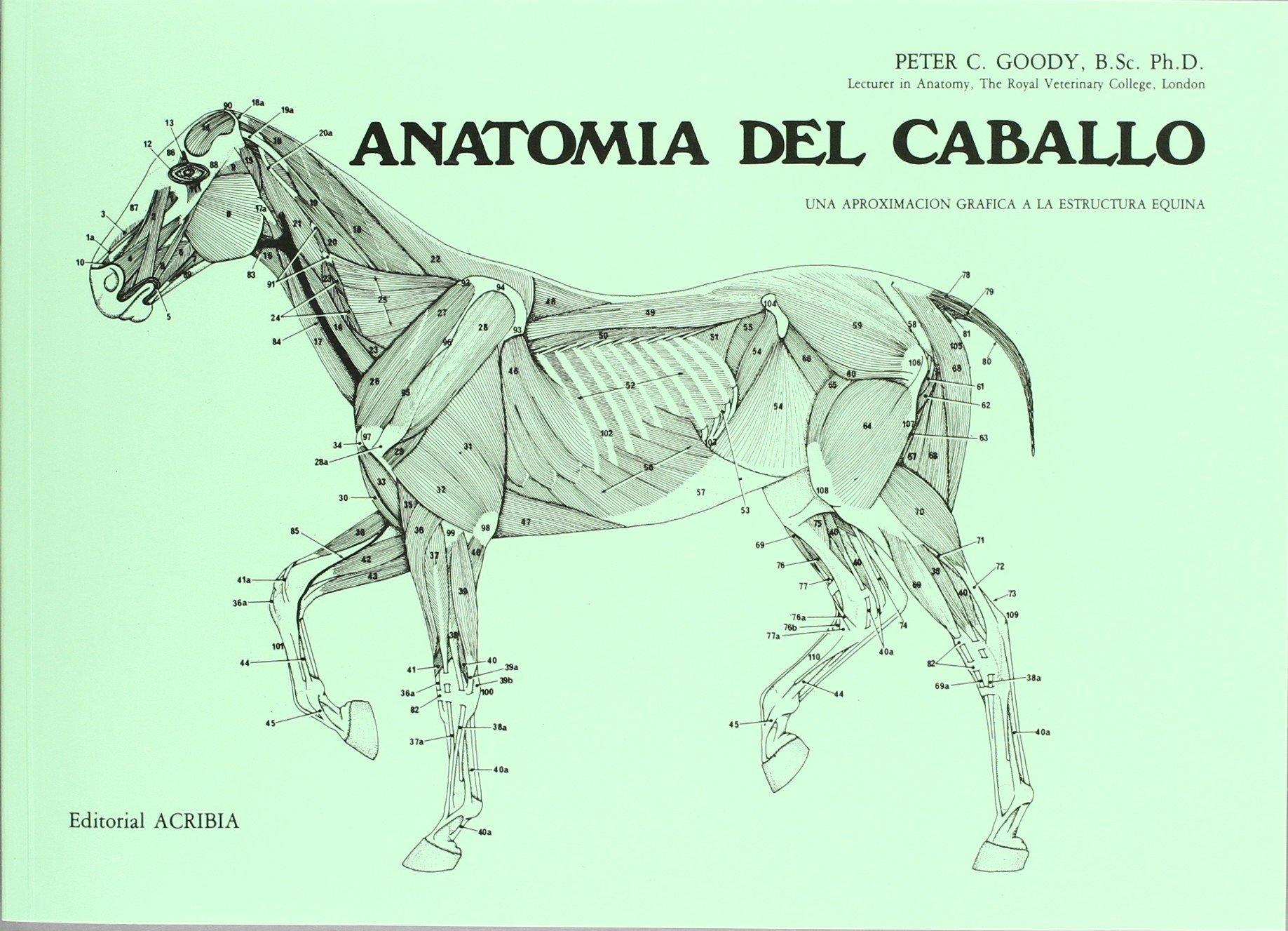 Anatomía del caballo: Amazon.es: Peter G. Goody: Libros