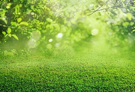 Amazon Com Nature Outdoor Background Photography Green