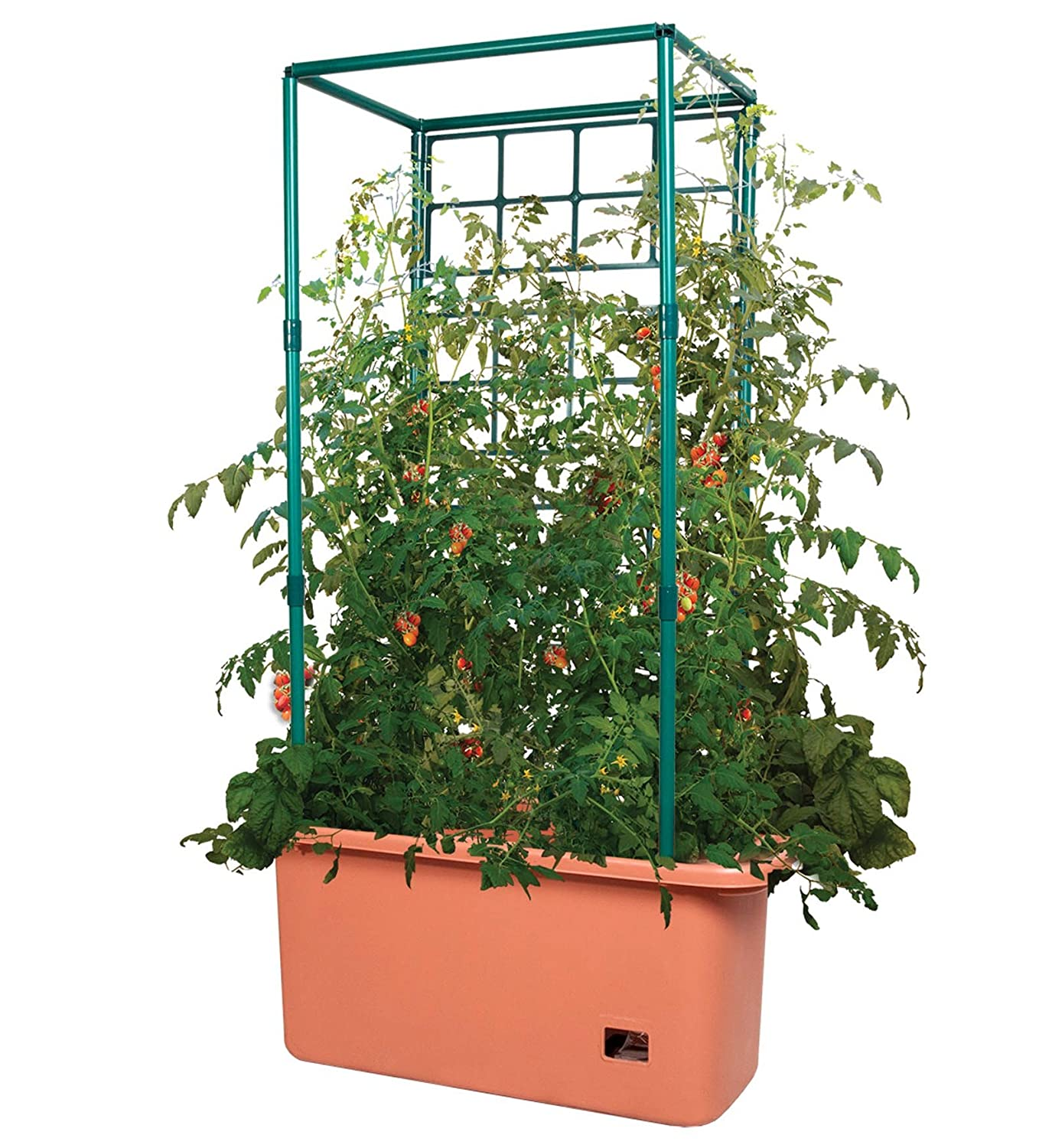 10 Gallon Hydroponic with Trellis on Wheels for grow cabbage in pots