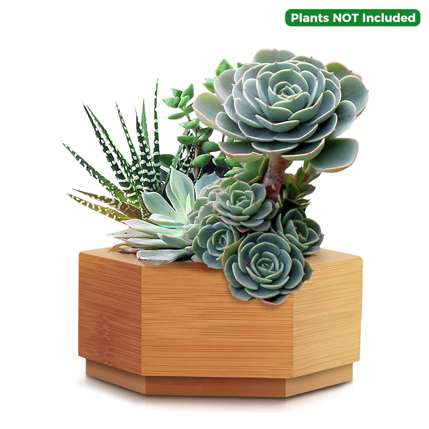 CUUCOR Modern Bamboo Succulent Planter Pot,Indoor Plant Holder for Succulent Plants/Mini Cactus/Artificial Flowers/Air Plant by CUUCOR