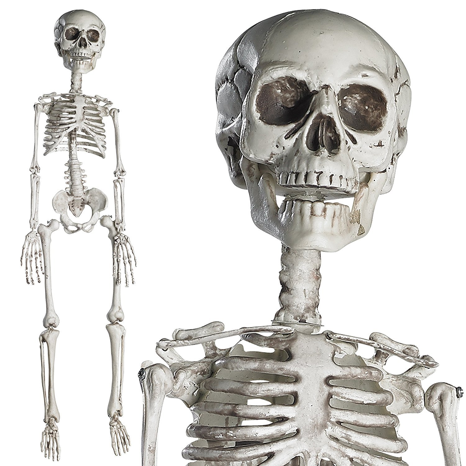 Prextex 76cm Halloween Skeleton- Full Body Halloween Skeleton with Movable Joints for Best Halloween Decoration