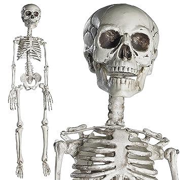 Amazon.de: Prextex 76cm Halloween Skelett - komplettes Skelett mit ...