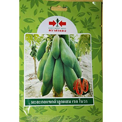 8 Thai Papaya Seeds : Garden & Outdoor