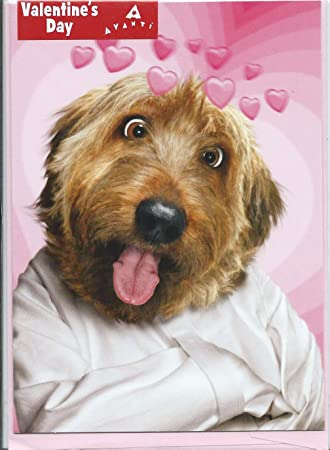 Amazon.com : Straight Jacket Dog Funny Valentine's Day Card ...
