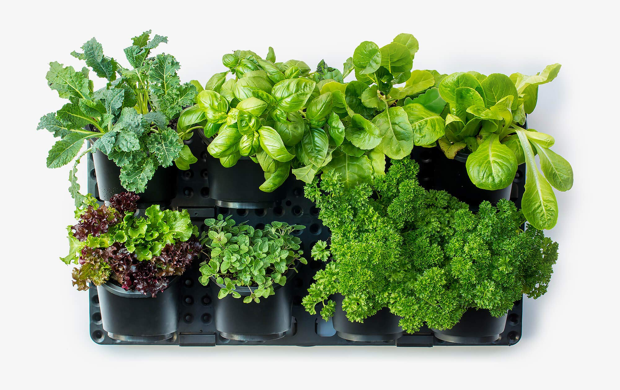 Expandable Green Wall w/Built-in Micro dripper, Single Pack