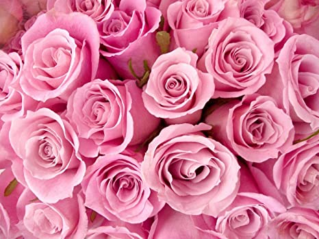 Gsquare Wallpaper Pink Rose Flower Green Wallpaper Living Room Bed