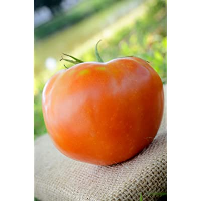 Rutgers The Legendary Jersey Tomato Premium Seed Packet + More : Garden & Outdoor