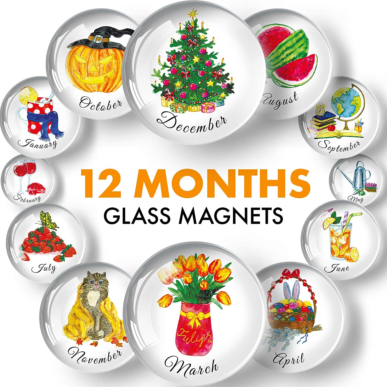 Glass Decorative Magnets for Refrigerator - Funny Fridge Magnets - Cute Locker Magnets for Boys and Girls - Succulent Refrigerator Magnets for Office and Kitchen