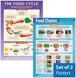 "Food Chains & The Food Cycle Poster Set - Pack of 2 | Science Posters | Gloss Paper Measuring 33"" x 23.5"" 