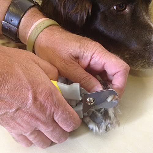 Using-Dog-Nail-Clippers