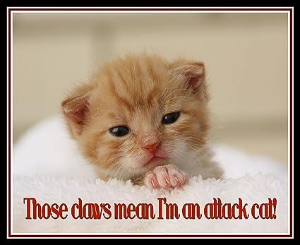 Amazon Com Funny Cat Quote Art Print 8 X 10 Glossy