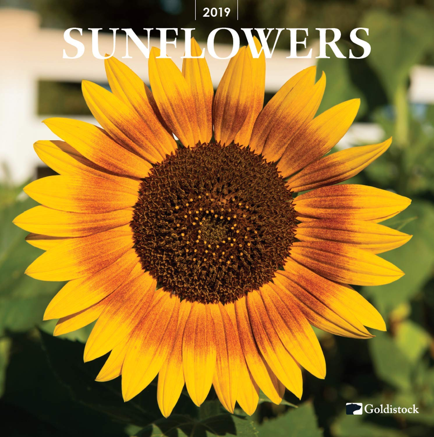 Goldistock -''Sunflowers'' Eco-Friendly 2019 Large Wall Calendar - 12'' x 24'' (Open) - Thick & Sturdy Paper - Will Brighten Your Day