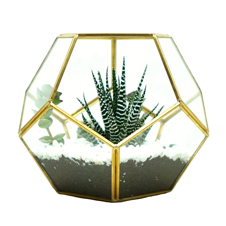 Amazon Com Lovenite Glass Terrarium Brass Pentagon Regular