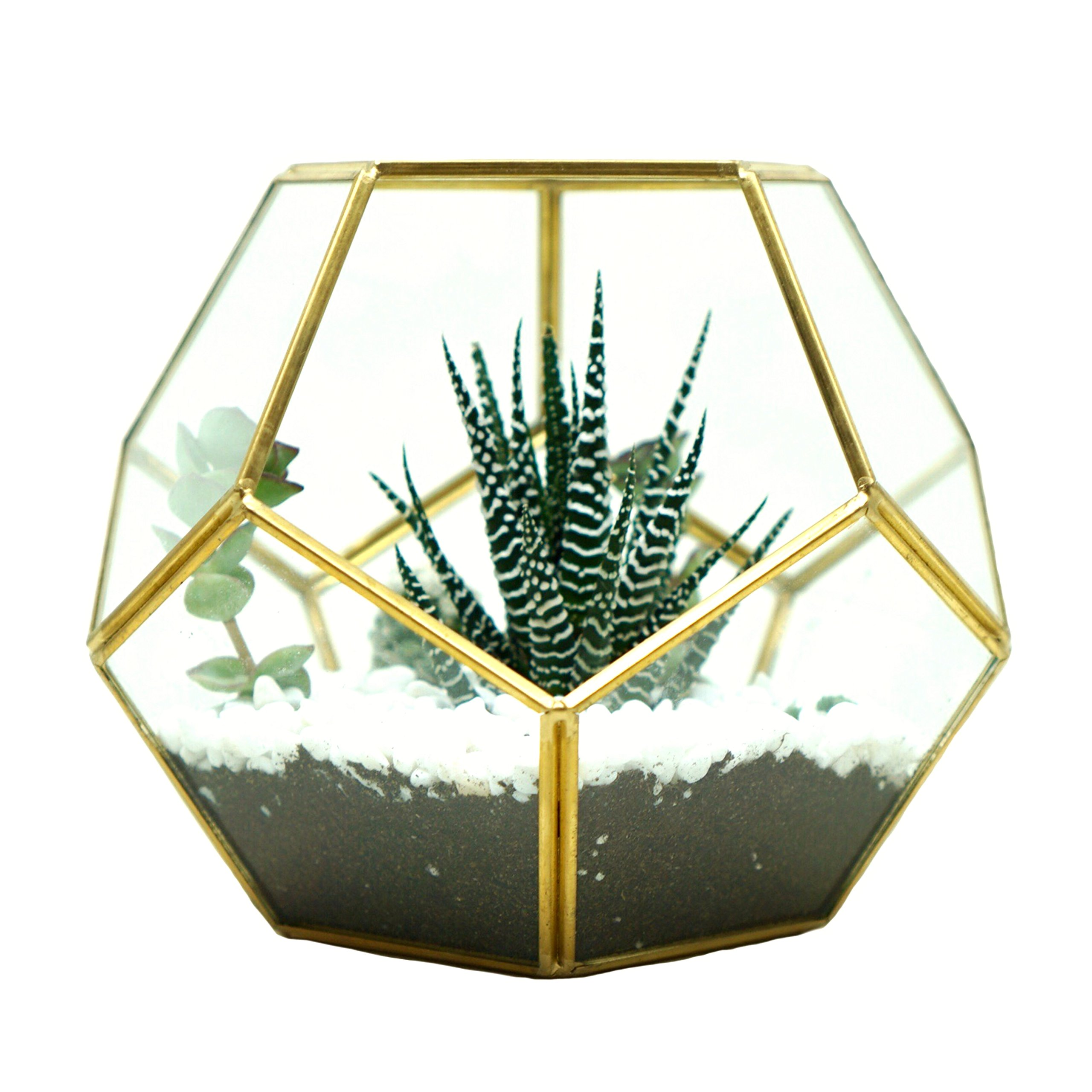 Glass Terrarium Brass Pentagon Regular Dodecahedron Geometric Container, LoveNite Sphere Terrarium Desktop Planter for Succulent Fern Moss Air Plants (Gold) by LoveNite